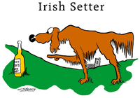 Irish_setter