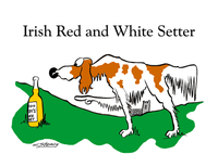 Irish_red_n_white_setter